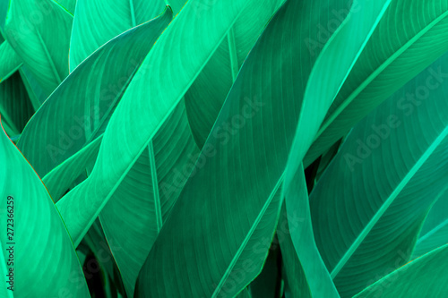 Plakaty botaniczne   plakat-na-wymiar-tropical-green-leaf-texture-green-leaves-background-nature-dark-green