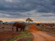 Elephant In Tsavo East National Park, Kenya