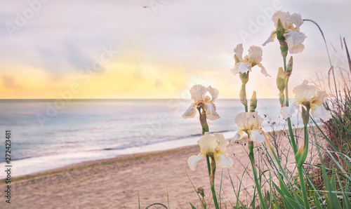 Seascape in the early morning. Flowers wild irises on the beach.