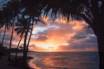Plage bois Jolan, Guadeloupe
