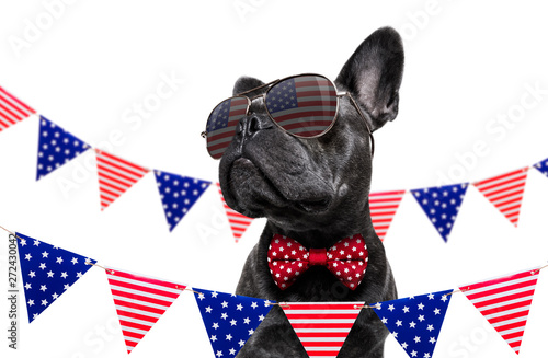 Foto op Aluminium Hoogte schaal independence day 4th of july dog