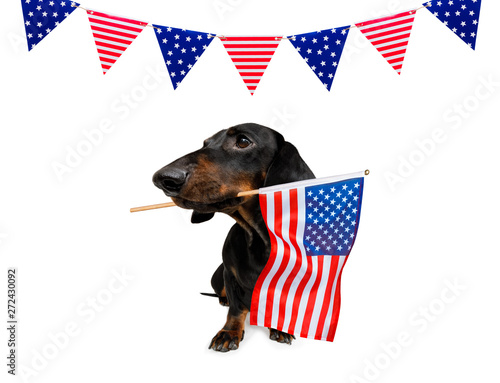 Photo Stands Crazy dog independence day 4th of july dog