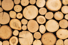 Creative Background Of Transversely Cut Tree Trunks. Natural Wood Structure.