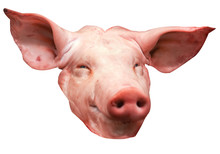 Isolated Head Of A Pig (on White Background)