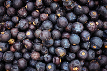 Juniper Berries Gin Background