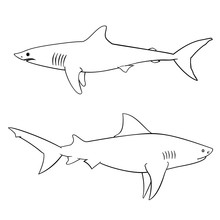 Coloring Book For Children, Sharks