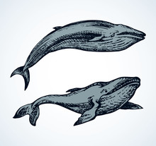 Whale. Vector Drawing