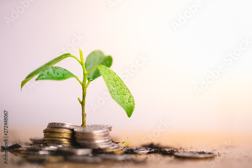 Obraz Young plant grow and coins stack, Pension fund, 401K, Passive income, Investment and retirement concept. savings and making money, Business investment growth concept. Risk management. - fototapety do salonu