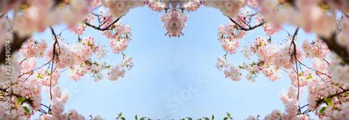 Fotografija  fiori di ciliegio in cornice speculare