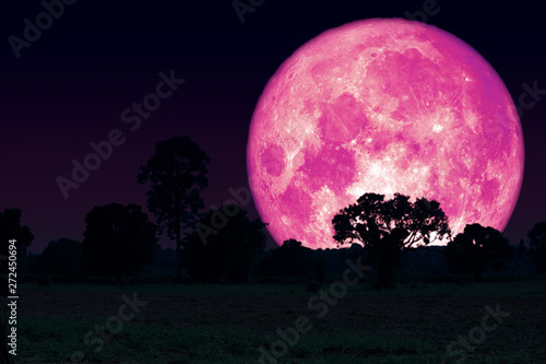 Rose Moon back silhouette trees in the field Wallpaper Mural