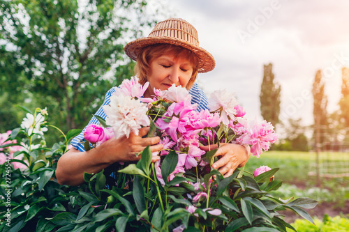 Photo  Senior woman gathering and smelling flowers in garden