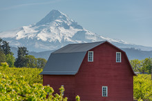 Majestic Oregon Country Scenery Of Mt Hood Over Classic Red Barn