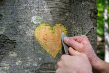 Hand Of A Young Man Carving A Heart Shape On A Tree