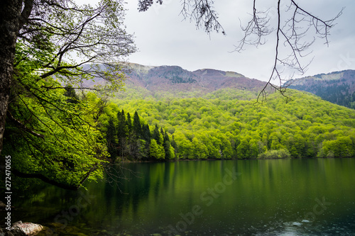 Photo  Montenegro, Biogradsko lake surrounded by green mountains in unspoiled nature la