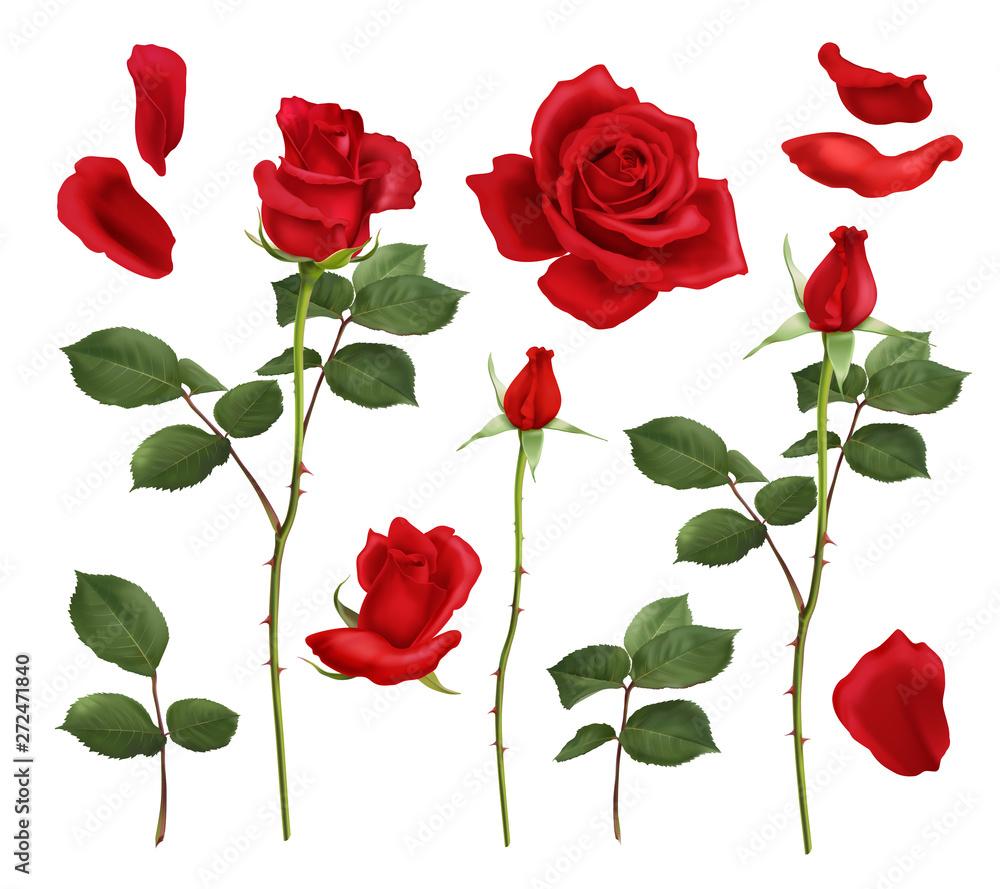 Fototapeta Red Rose Realistic Set
