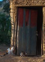 Gatos A La Espera De Alimentos En Zona Rural De Venezuela
