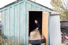 Little Boy Cleaning Out The Chicken Coop