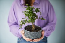 Woman Holding A Bonsai Tree