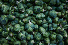 Day Of Harvest: Brussels Sprout