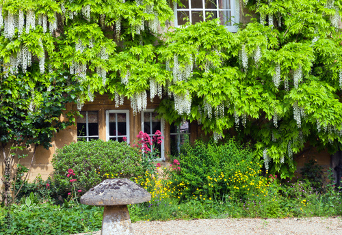 Front cottage garden with white wisteria in bloom on stone wall and colourful flowers around mushroom ornament, Cotswolds, United Kingdom Fotobehang