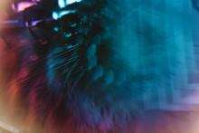 Prismatic Cat