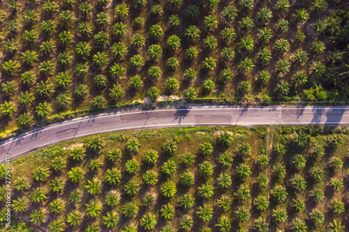 Fotografija  Aerial view of road in center of palm tree plantation