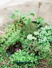 Plants And Herbs In Pots In Summer Garden Corner