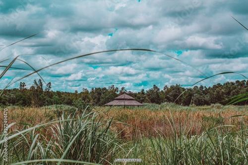 Foto auf AluDibond Nordsee field and blue sky