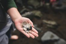 A Handful Of Shells
