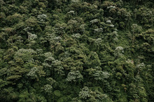 Mountainside Of Trees