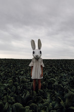 Scary Bunny On Cabbage Field