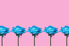 Five Blue Roses