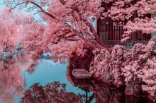 Suzhou Gardens, Infrared Photography