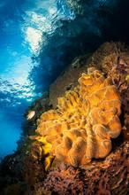 Soft Coral Sunrise