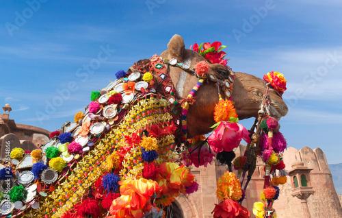 Keuken foto achterwand Kameel Beautiful decorated Camel at Bikaner camel festival in Rajasthan, India