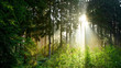 canvas print picture - Sunrise in the misty forest with bright light shining through the trees
