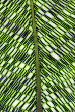 Remarkable Mosaic Leaf Macro