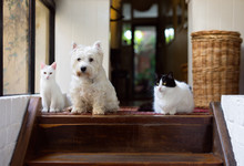 White Dog And Two Cats Sitting...