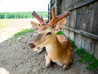 Deer grazing on the field