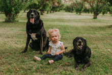 Cute Little Girl Sitting With Dogs