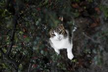 Cat Under Tree In A Garden