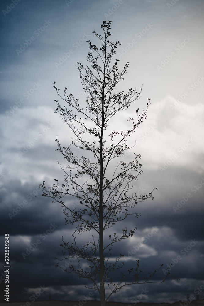 A dramatic image of a tall tree sitting against moody skies in the background with blue and yellow tones