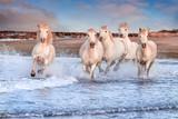 Fototapeta Konie - White horses in Camargue, France.