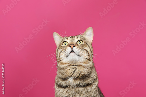 In de dag Kat Cute tabby cat on color background. Friendly pet