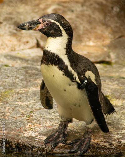 Penguin Tapéta, Fotótapéta