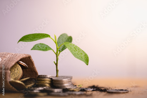 Pinturas sobre lienzo  Young plant grow and coins stack, Pension fund, 401K, Passive income, Investment and retirement concept