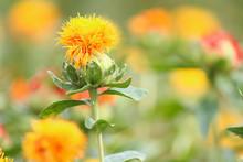 オレンジの花と緑の葉...
