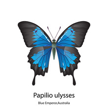 Butterfly On White Background,Papilio Ulysses,Blue Emperor,Australia.