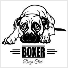 Boxer - Vector Illustration Fo...