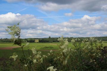 Fototapeta na wymiar landscape with green field and blue sky 2